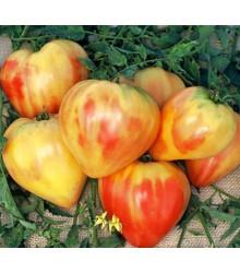More about Rajče ruské oranžové - prodej semen rajčat - 6 ks