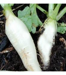 More about Ředkev bílá delikatesa - prodej semen ředkve - 60 ks