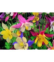 More about Orlíček velkokvětý směs barev - Aquilegia caerulea - osivo orlíčku - 250 ks