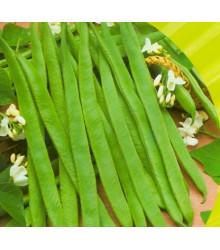 More about Fazol tyčkový bílý Hilda - Phaseolus vulgaris - prodej semen - 2 gr