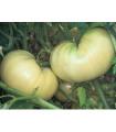 Rajče bílé- semena rajčete- 6 ks
