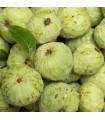 Čerimoja - Anona čerimoja - Anona cherimoia - semena Anony - 5 ks