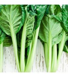 Tatsoi - Brassica rapa var rosularis - osivo tatsoi - 100 ks