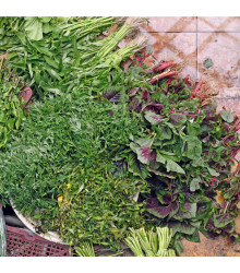 Mix orientálních salátů - osivo salátu - 50 ks