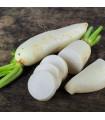 Ředkev setá bílá - Rahpanus sativus - prodej semen bílé ředkve - 1 gr