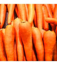 Mrkev Rote Riesen - Daucus carota - osivo mrkve - 1 g