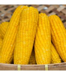 Kukuřice setá Tatonka F1 - Zea Mays - osivo kukuřice - 15 ks