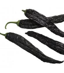 Chilli Pasilla Bajio - Capsicum annuum - osivo chilli - 7 ks