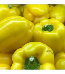 More about Paprika Pusztagold roční zeleninová - Capsicum annuum - semena papriky - 9 ks