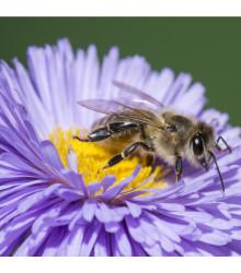 Medonosné květy pro včely - semena medonosných květů pro včely - 10 gr