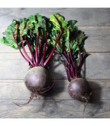 BIO Řepa červená Detroit 2 - Beta vulgaris var. vulgaris - bio semena řepy 50 ks
