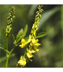 More about Komonice lékařská - Melilotus officinalis - prodej semen - 30 ks