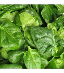 More about Špenát setý zelný Monnopa - Spinacia oleracea - osivo špenátu - 100 ks