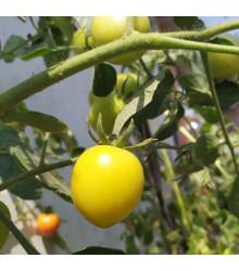 Rajče Lemon Plum - Lycopersicon lycopersicum L. - osivo rajčat - 6 ks