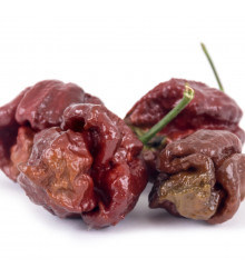 Chilli Trinidad Scorpion Moruga Chocolate - Capsicum chinense - osivo chilli - 5 ks