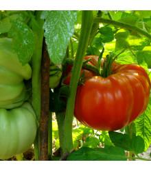 Rajče Soldaki - Lycopersicon Esculentum - osivo rajčat - 7 ks
