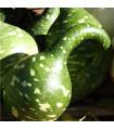 Okrasná tykev Cobra - Lagenaria siceraria - prodej semen - 5 ks