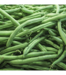 Fazolové lusky Negra - Phaseolus vulgaris - osivo fazolu - 10 ks