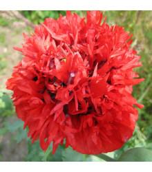Mák Scarlet Peony - Papaver somniferum - semena máku - 150 ks