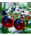 Rajče - černá Cherry rajčátka - prodej semen - 6 ks