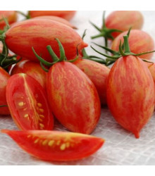 Rajče Artisan Pink Tiger - Lycopersicon esculentum - osivo rajčat - 5 ks