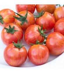 Rajče Artisan Pink Bumble Bee - Lycopersicon esculentum - osivo rajčat - 5 ks