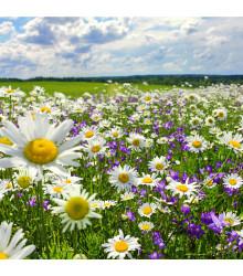 Slunná stráňka - semena lučních květin - 50 g