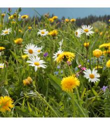 Horská louka - semena lučních květin - 10 g
