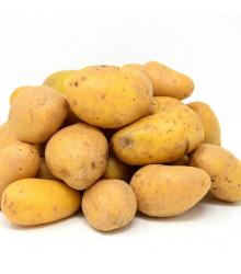Sadbové brambory Sunshine - Solanum tuberosum - žluté velmi rané - 5 kg