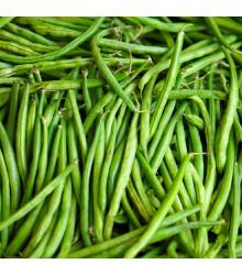 More about Fazol keříčkový Delinel - Phaseolus vulgaris - osivo fazolu - 20 ks